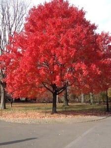 Outono em NY. A minha estação favorita !