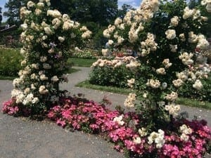 Jardim das Rosas, Jardim Botânico do Brooklyn, NYC.