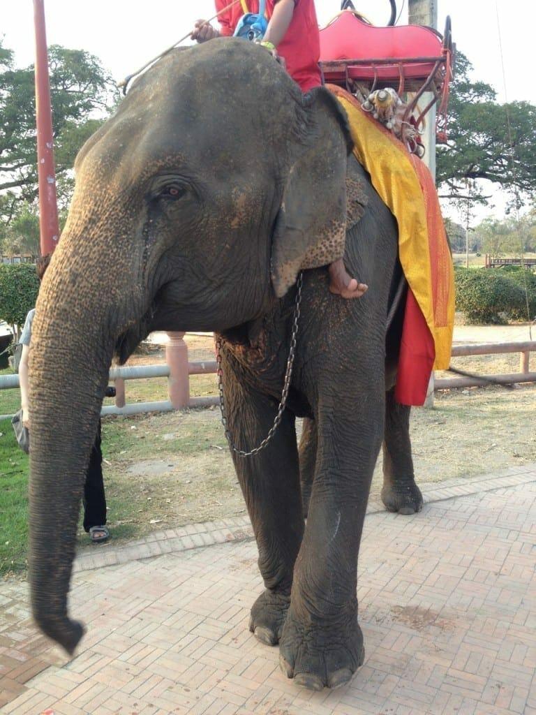 Elephant on the streets of Ayutthaya