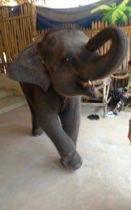 Elephant camp, Phuket, Thailand.