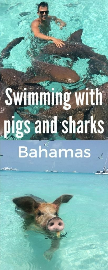 Swimming with pigs and sharks