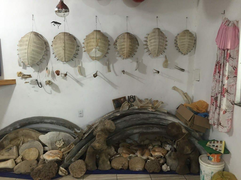 Museu dos Ossos