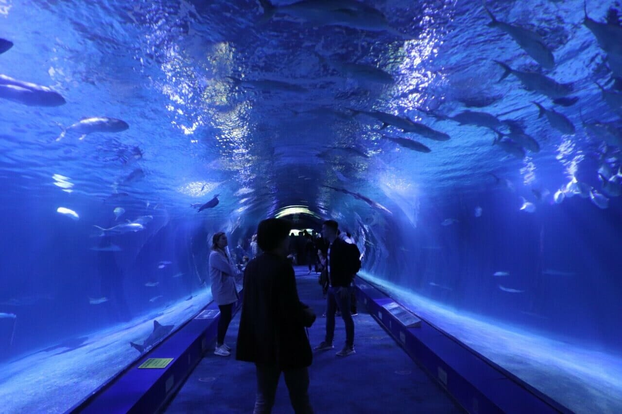 The Oceanogràfic contains representatives of the world's main marine ecosystems.