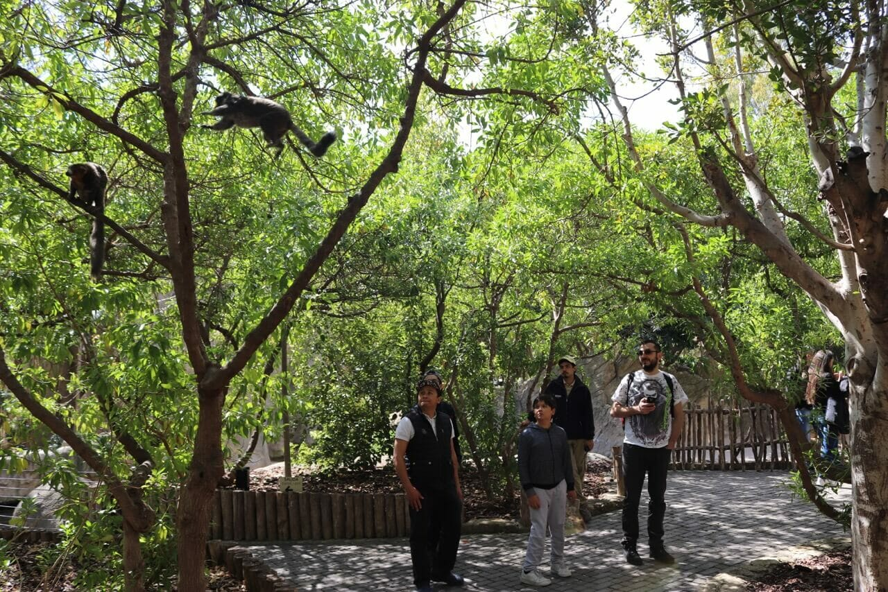 Vistin the Bioparc is one fo the best things to do in 3 days in Valencia