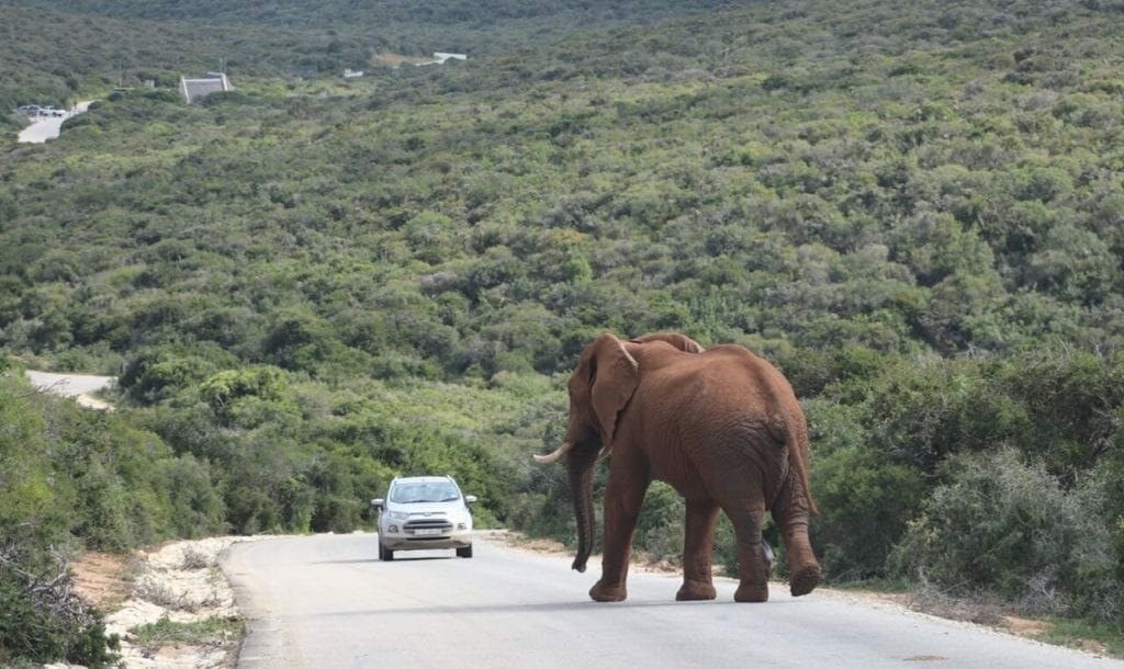 Safari at Addo Elephant National Park: What to Expect