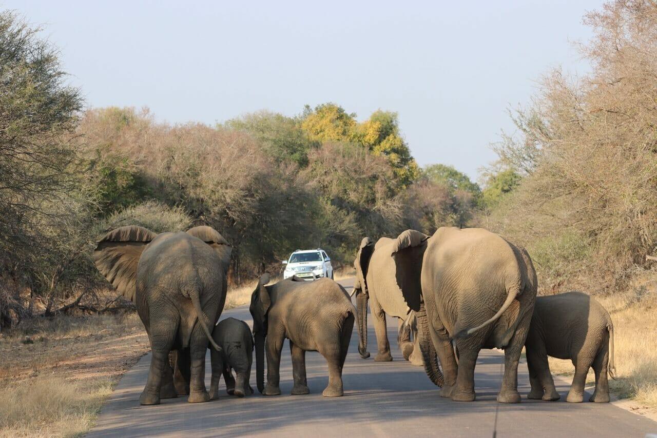 safári no Kruger Park