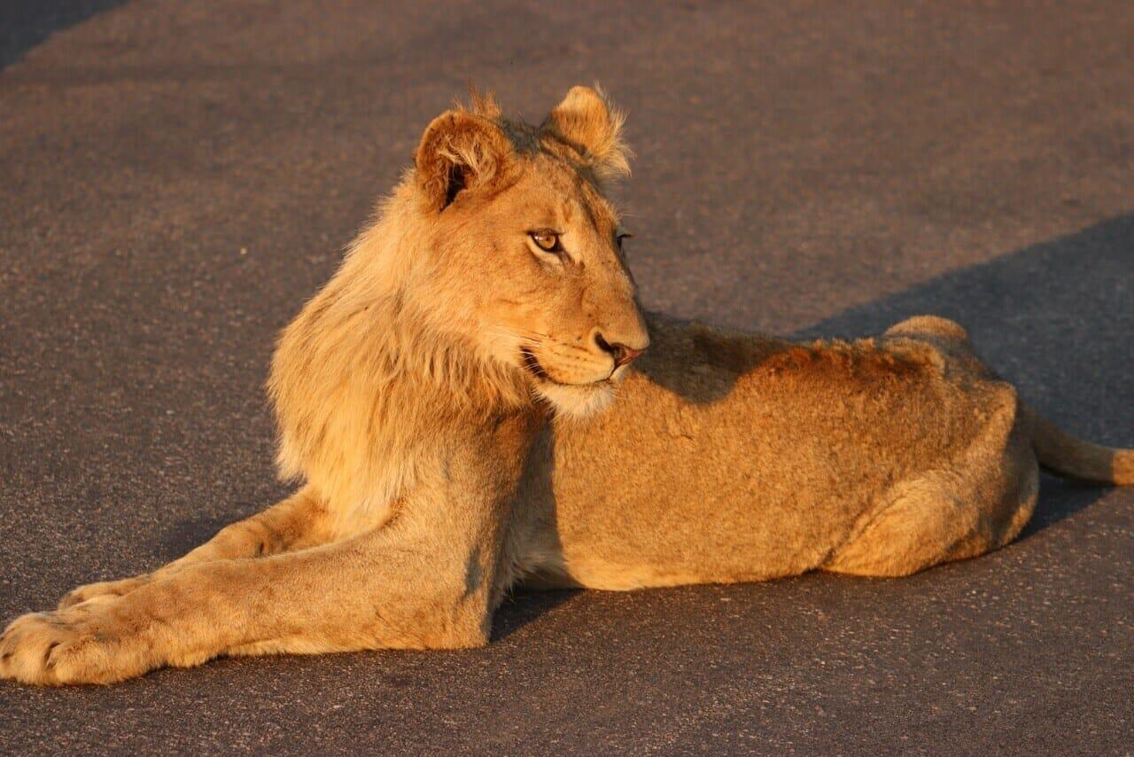 Kruger Park safai Sabi Sands