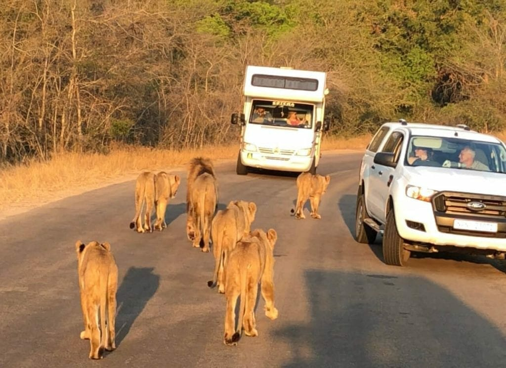 Doing a Kruger Park safari is a once-in-a-lifetime experience