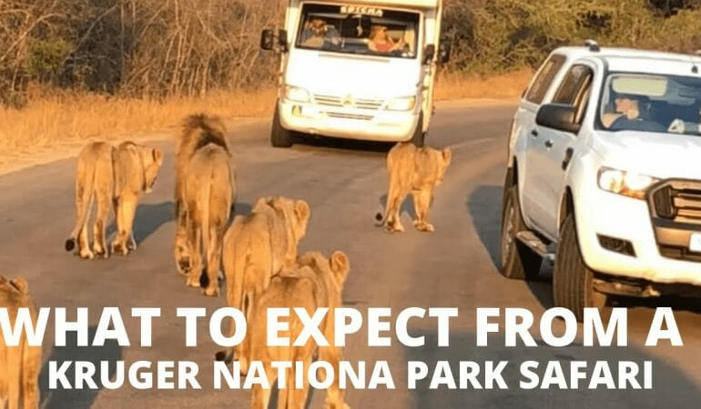What Expect from a Kruger National Park Safari – Video
