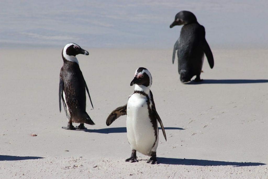 Boulders Beach, a famosa praia dos pinguins
